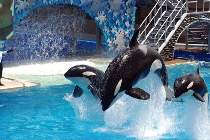 Will Virtual Reality replace the Killer Whales at Sea World?