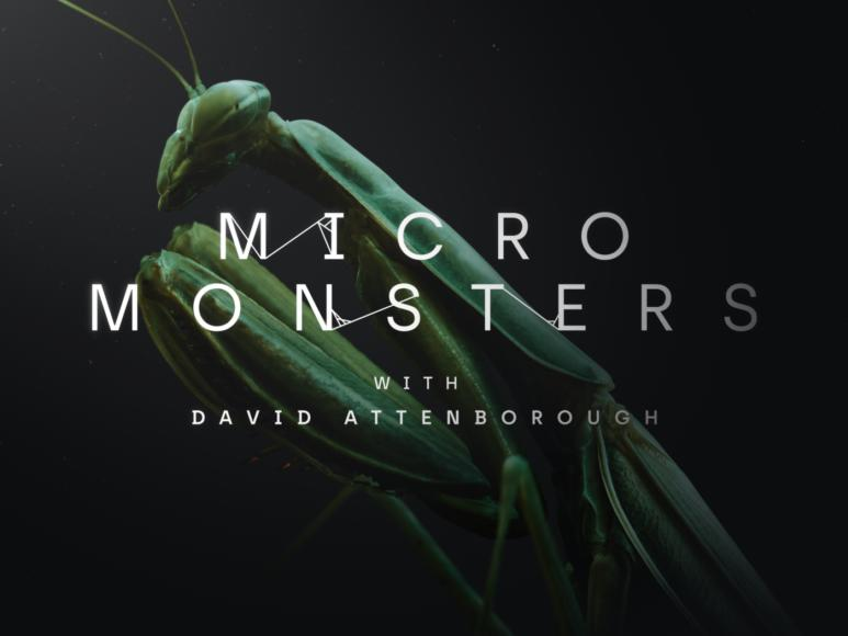 David Attenborough's Fascinating Look at Insects in VR
